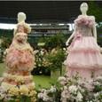 バラとドレスの競演
