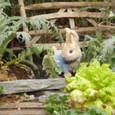 ピーターラビットの庭仕事