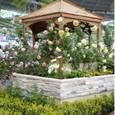かおりめぐる庭~フレンチローズと香りの植物